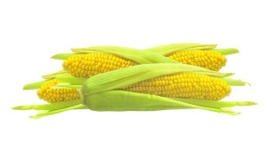 Sweet golden corn isolated on white background